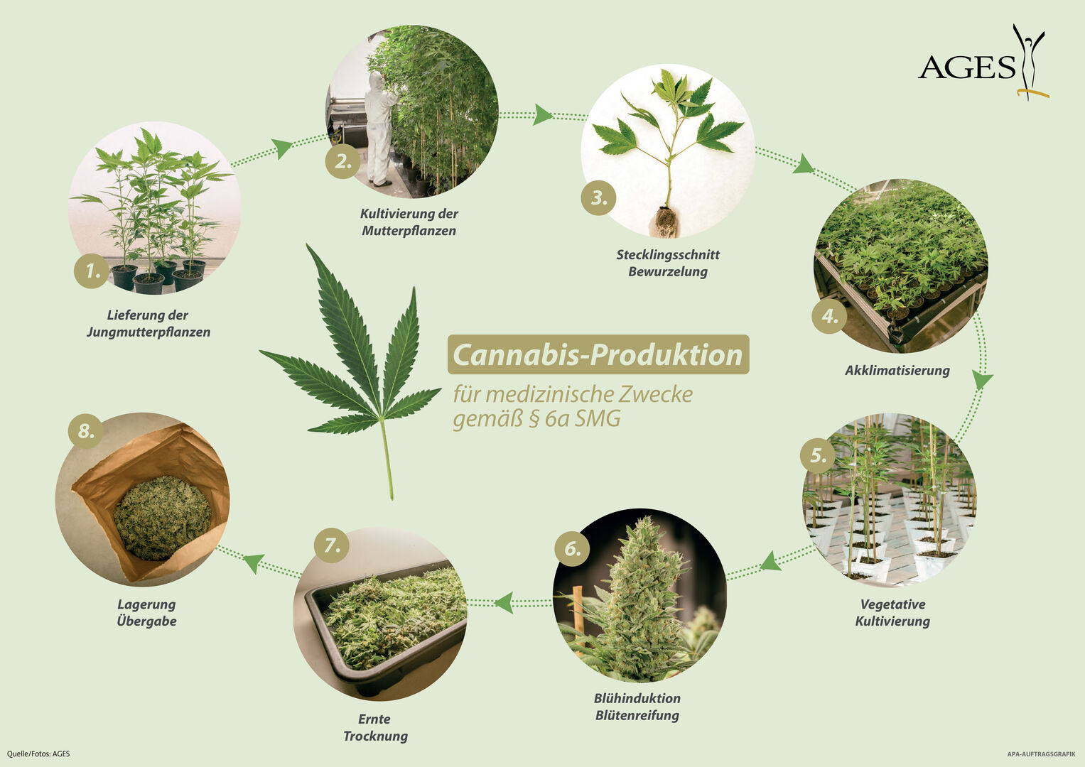 Cannabis-Produktion (FOTO: AGES)