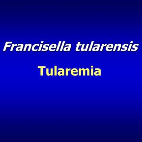 Clinical Characteristics of Ulceroglandular Tularemia in Two Bulgarian Regions, 2014-2015
