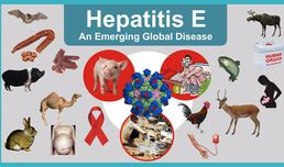 First Serological Study of Hepatitis E Virus Infection in Pigs in Bulgaria