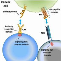 Cancer immunotherapy: the beginning of the end of cancer?