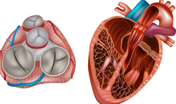 Modern heart valve diagnostics & therapy - VIDEO